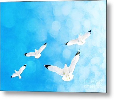 Metal Print featuring the photograph Fly Free by Robin Dickinson
