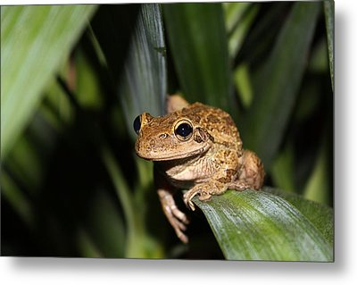 Frog Metal Print by Jeanne Andrews
