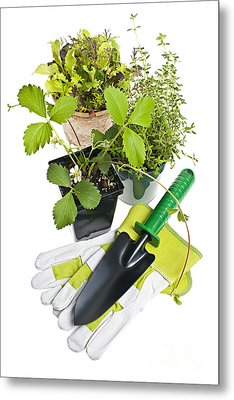 Gardening Tools And Plants Metal Print by Elena Elisseeva