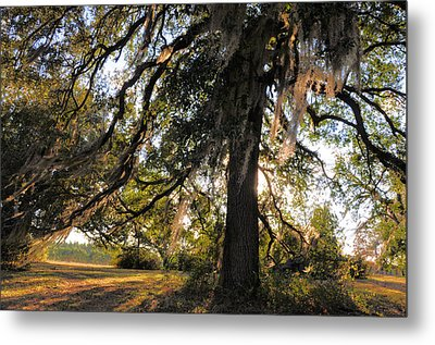 Gentle Breeze Metal Print by Jan Amiss Photography