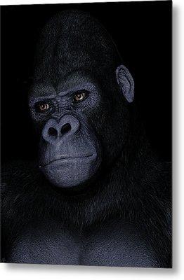 Gorilla Portrait Metal Print by Maynard Ellis