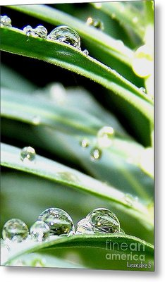 Metal Print featuring the photograph Gouttes by Sylvie Leandre