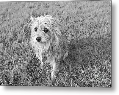 Metal Print featuring the photograph Gremlin by Jeannette Hunt