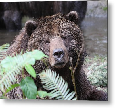 Grizzley - 0011 Metal Print