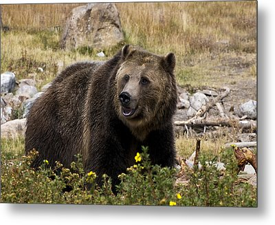 Metal Print featuring the photograph Grizzly by Gordon Ripley