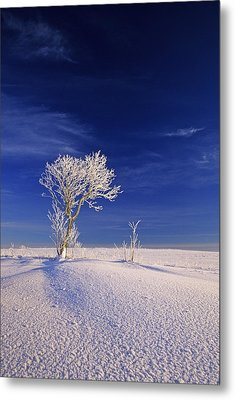 Hoar Frost On Trees, Bungay, Prince Metal Print by John Sylvester