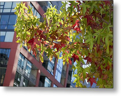 Inner City Autumn Metal Print