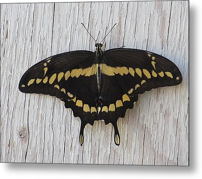 Kewl Moth Metal Print