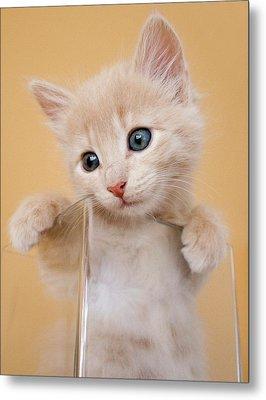Kitten In Glass Vase Metal Print by Sanna Pudas