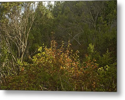 Last Of The Poison Oak Metal Print by Larry Darnell