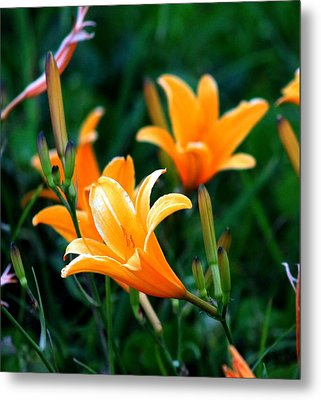 Metal Print featuring the photograph Lilies by Elizabeth  Doran