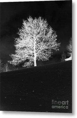 Lone Tree Metal Print by David Bearden