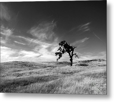 Metal Print featuring the photograph Loneliness by Irina Hays