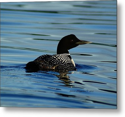 Metal Print featuring the photograph Loon 2 by Steven Clipperton