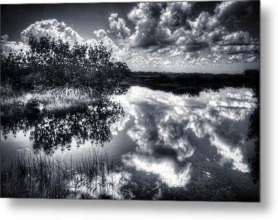 Mangroves In The Morning Metal Print by Bob Hartmann