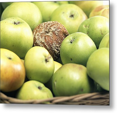 Mouldy Apple Metal Print by Sheila Terry