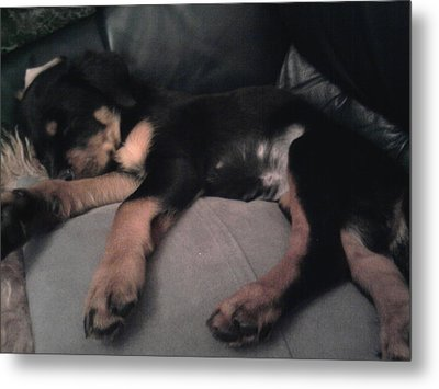 My Sleepy Pup Metal Print by Susan  Solak