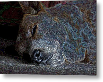 Nap Time Metal Print by One Rude Dawg Orcutt