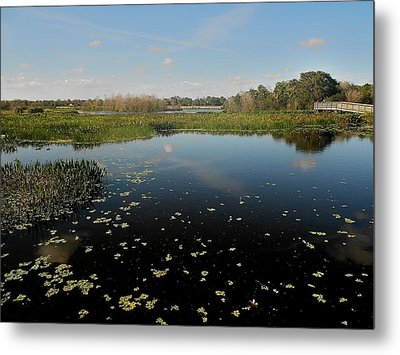 On A Clear Day Metal Print by Sheila Silverstein