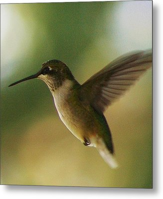 On The Fly Metal Print by Bruce Bley