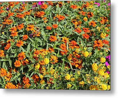Orange And Yellow Metal Print by Theresa Willingham