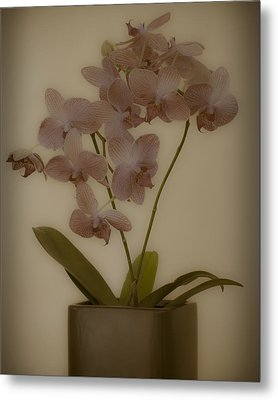 Metal Print featuring the photograph Orchid by James Bethanis