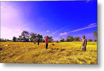 Metal Print featuring the photograph Paddy Field by Arik S Mintorogo