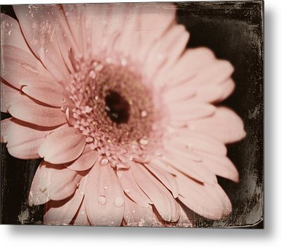Pale Pink Metal Print by Cathie Tyler