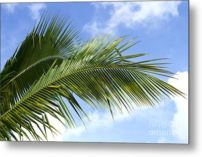 Palm  Metal Print by Blink Images