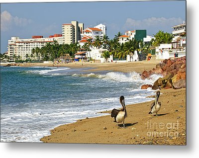Pelicans On Beach In Mexico Metal Print