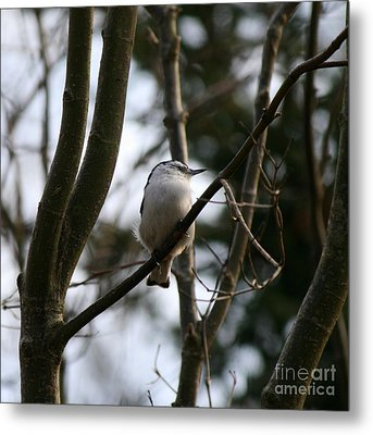 Perched And Content  Metal Print by Neal Eslinger