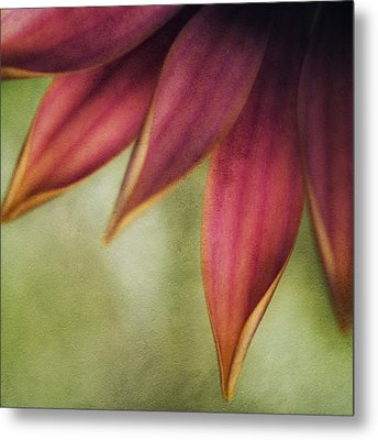 Petals Metal Print by Bonnie Bruno