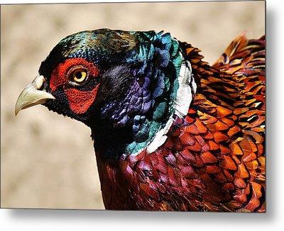 Pheasant Metal Print by Paulette Thomas