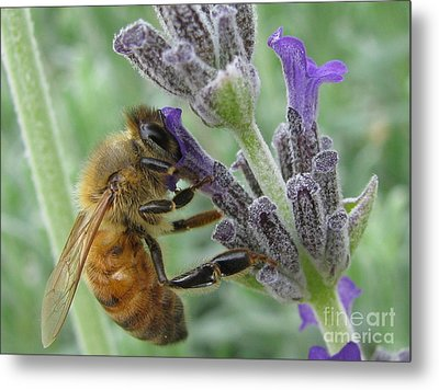 Pollen Catcher Metal Print