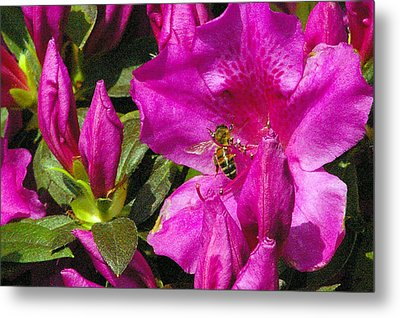 Metal Print featuring the photograph Pollinating  by Brian Wright
