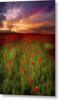 Metal Print featuring the photograph Poppies At Dusk by John Chivers