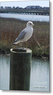 Posing Seagull Metal Print