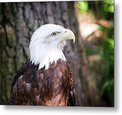 Proud Eagle Metal Print by Tammy Smith