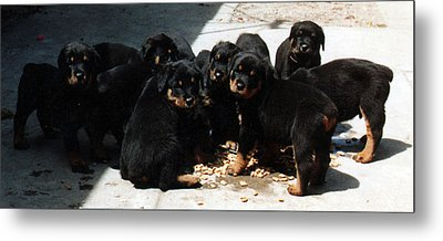 Puppy Chow Metal Print