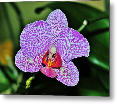 Metal Print featuring the photograph Purple Orchid by Sherman Perry