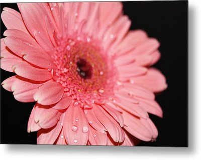 Rain Drops Metal Print by Cathie Tyler