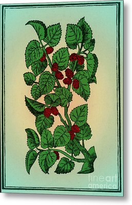 Red Mulberry Metal Print by Science Source