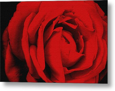 Red Rose Metal Print by Robert Kernodle