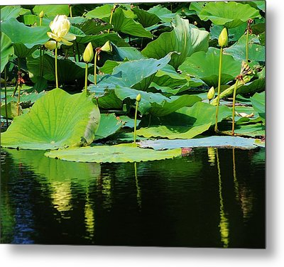 Reflecting Waters Metal Print by Bruce Bley