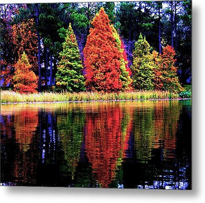 Reflections Metal Print by Carrie OBrien Sibley