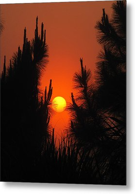 Rise And Pine Metal Print by Peg Urban