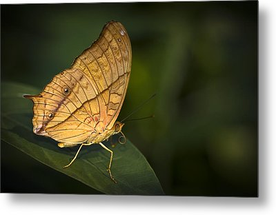 Saturn Butterfly Metal Print