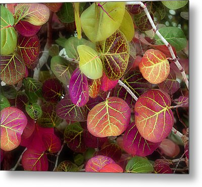 Sea Grape Metal Print by Joseph G Holland