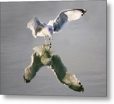 Sea Gull Reflection Metal Print by Paulette Thomas