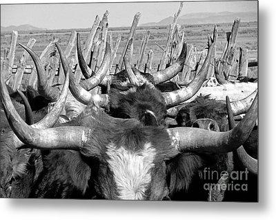 Sea Of Horns Metal Print by Megan Chambers